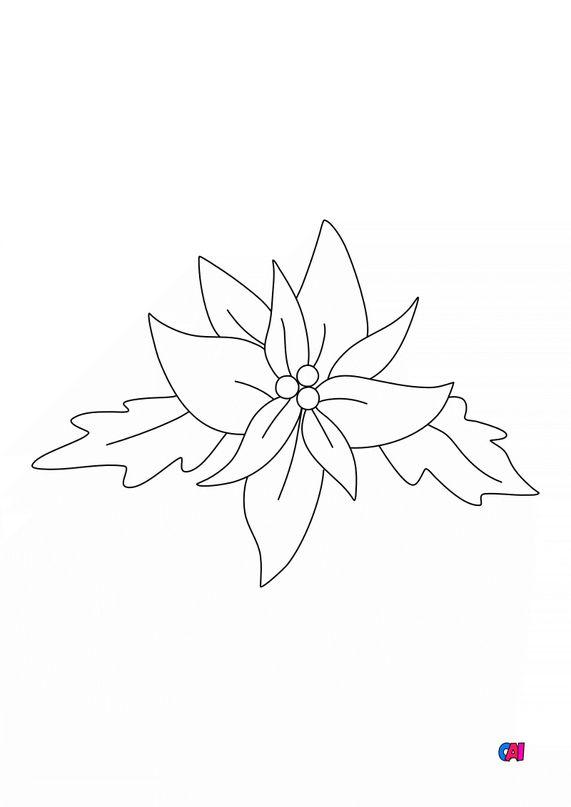Coloriage de Noël - Poinsettia la fleur de l'hiver