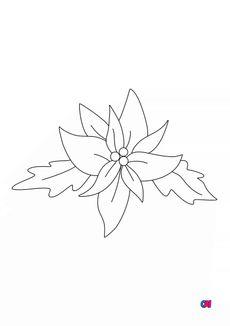 Coloriage Poinsettia la fleur de l'hiver
