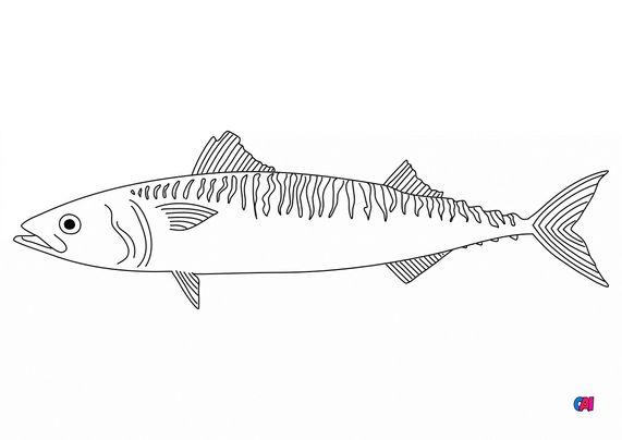 Coloriages d'animaux - poisson fin
