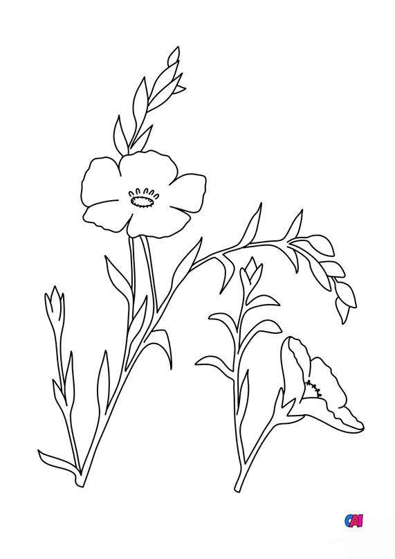 Coloriage de fleurs - Lin