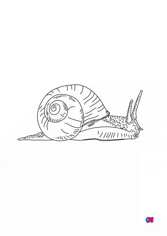 Coloriages d'animaux - Escargot 5