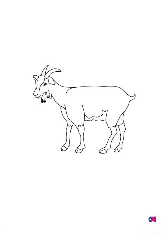 Coloriages d'animaux - Une chèvre 3
